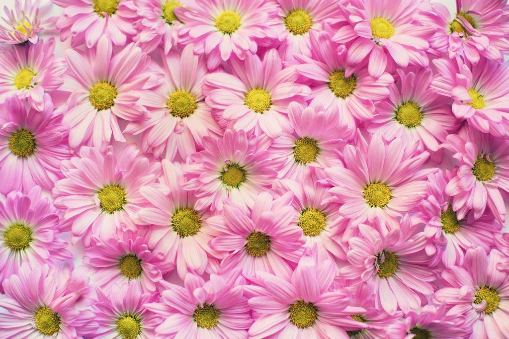 【花柄のリバティ】生地の種類とその特徴をご紹介します