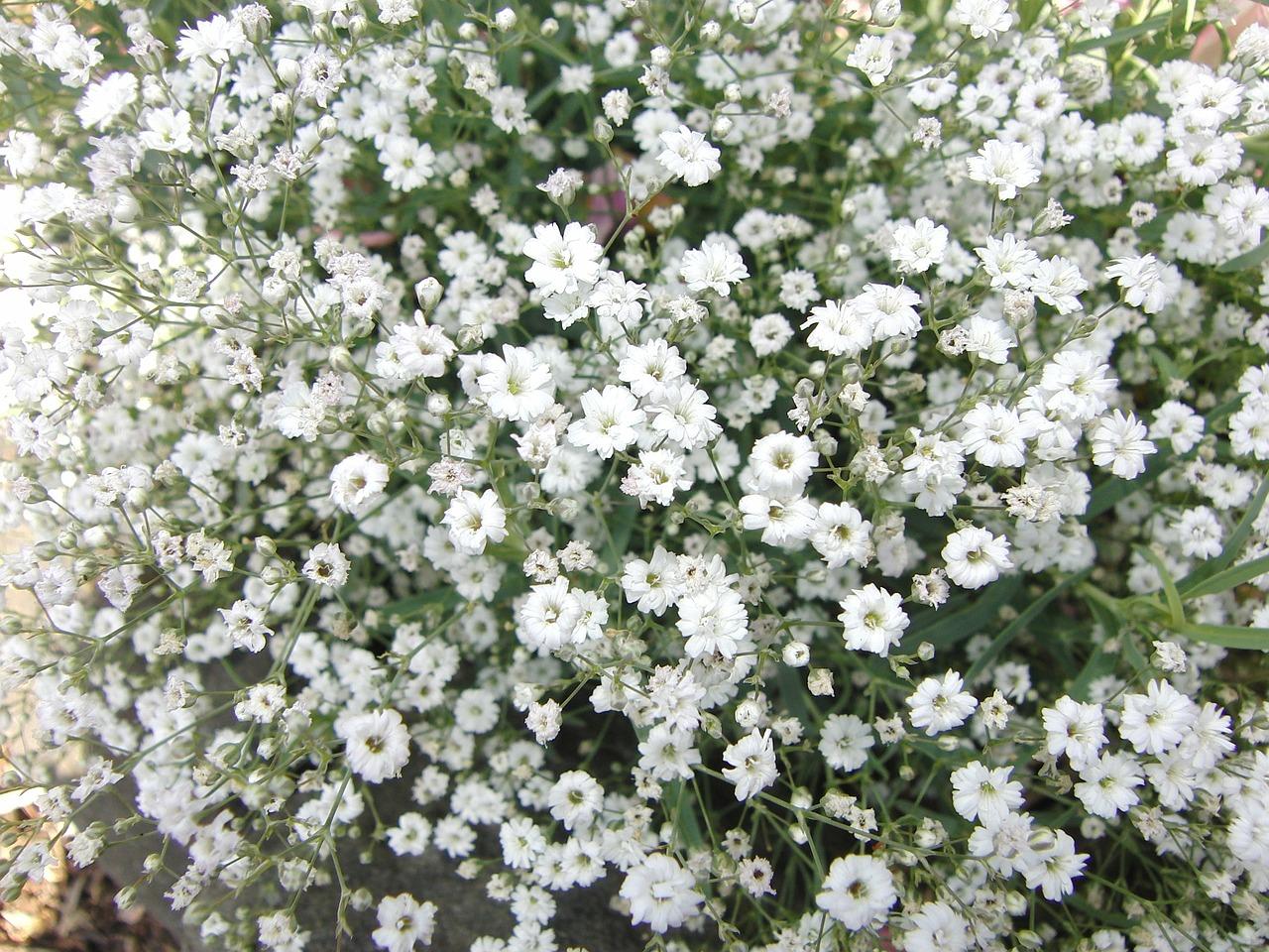 結婚式準備|装花に人気!かすみ草の魅力であなたも清楚な花嫁に