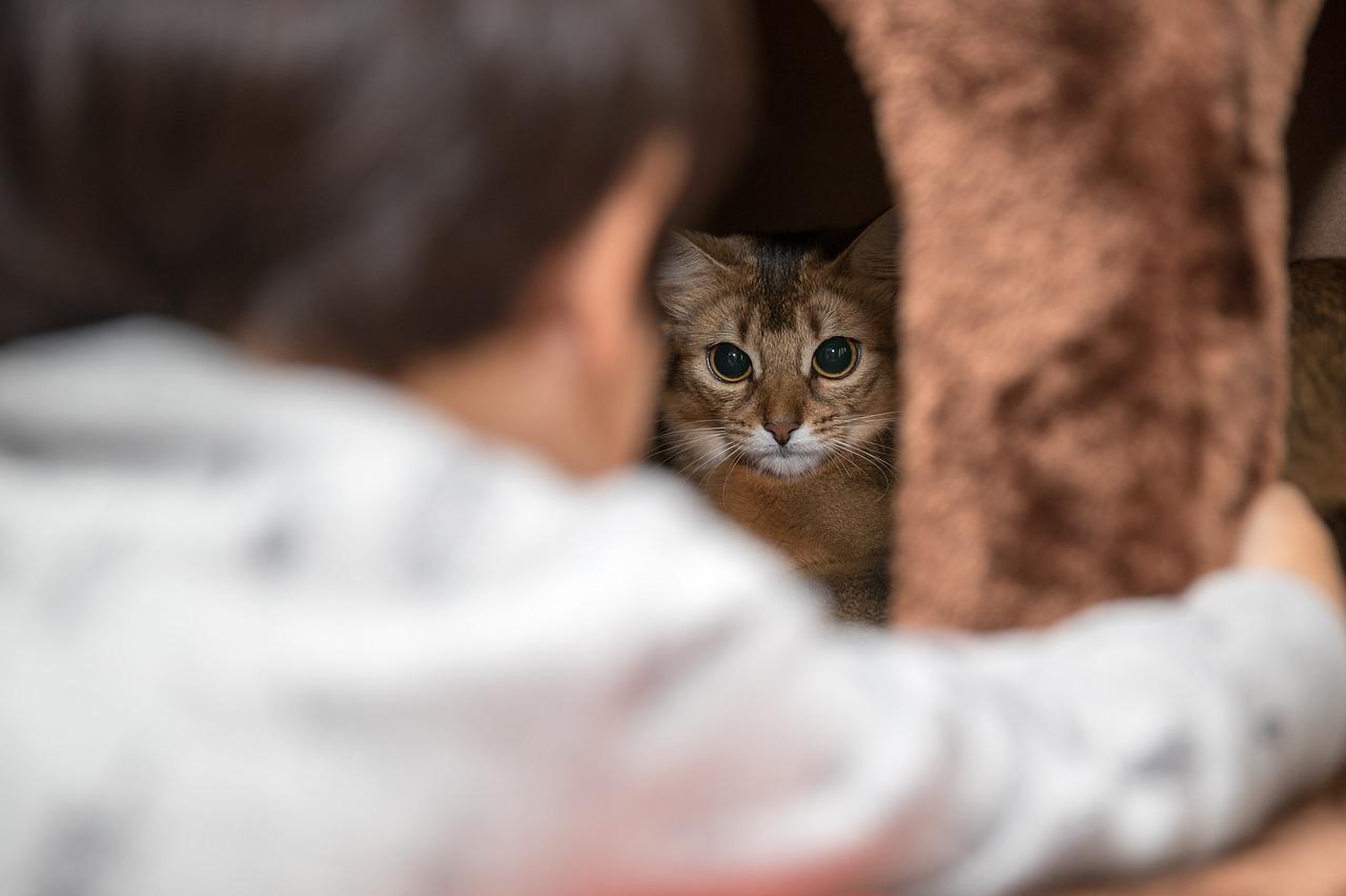猫・犬などのペットと赤ちゃんの寝室は別に分けるべきなのか?