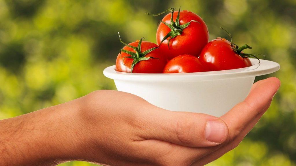 家庭菜園でのトマト栽培。 枯れる原因を知りたい