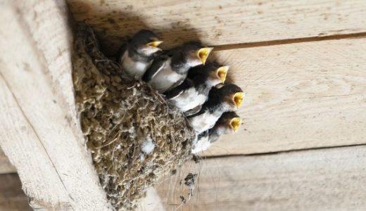困る・・ツバメの巣への対策法!ネットで覆うと絶大な効果が?!